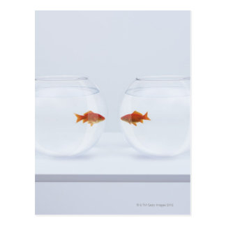 Goldfish in separate fishbowls looking face to fac postcard