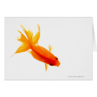 Goldfish, overhead view card