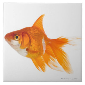 Goldfish, side view tile
