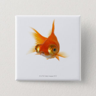 Goldfish with Big eyes 15 Cm Square Badge