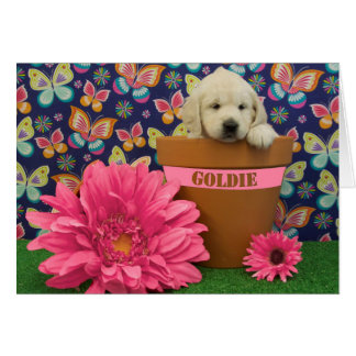 Goldie, week 5 photo card