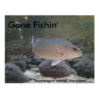 Gone Fishin' at Assateague Island, MD Postcard