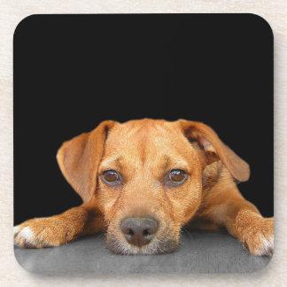 Good Dog Drink Coasters