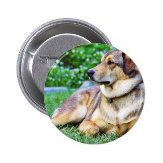 Good Dog Pinback Button