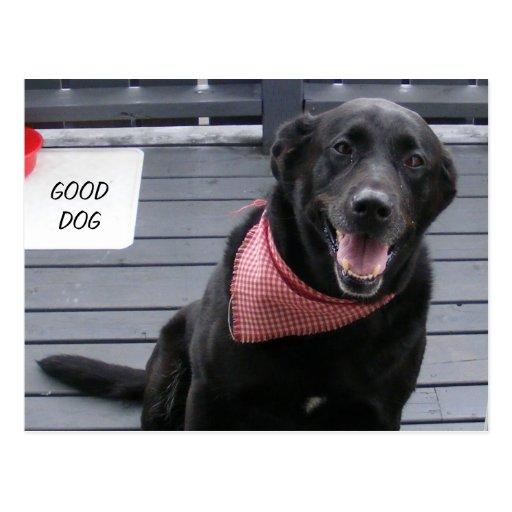 GOOD DOG POST CARD
