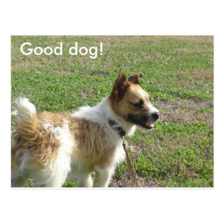 Good Dog Postcard