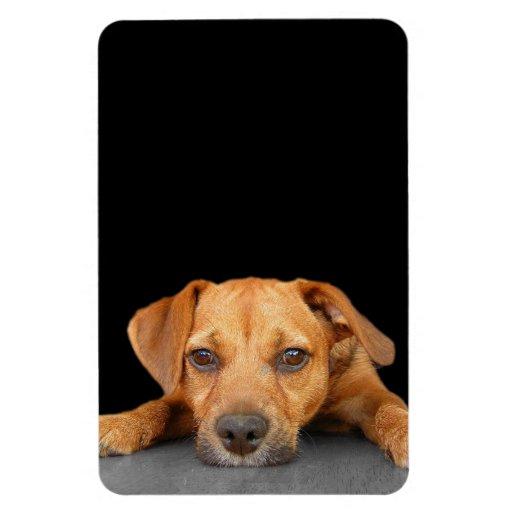 Good Dog Rectangular Magnets
