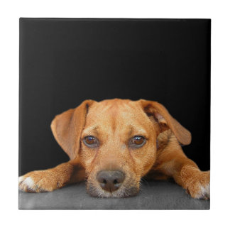 Good Dog Small Square Tile