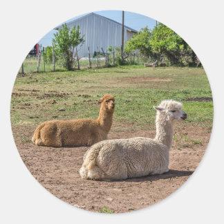Good Looking Llamas(lama glama) on Green Grass Classic Round Sticker
