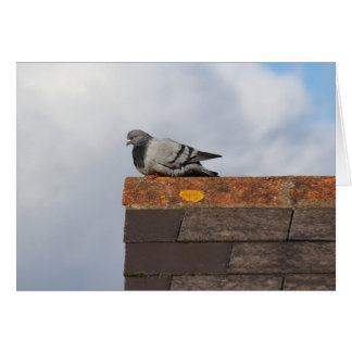 Good Morning Pigeon Greeting Card