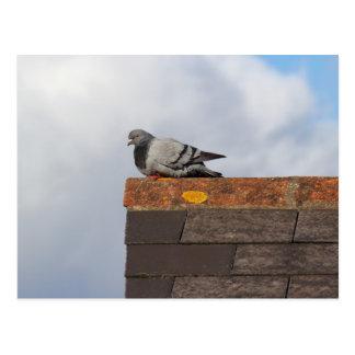 Good Morning Pigeon Postcard