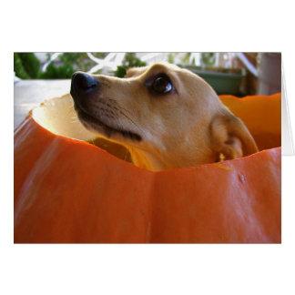 Good Rufus Chihuahua Halloween Pumpkin Card