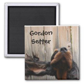Goofy Gordon Setter Magnet