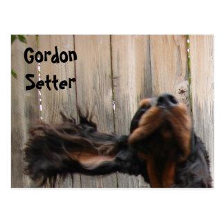 Goofy Gordon Setter Postcard