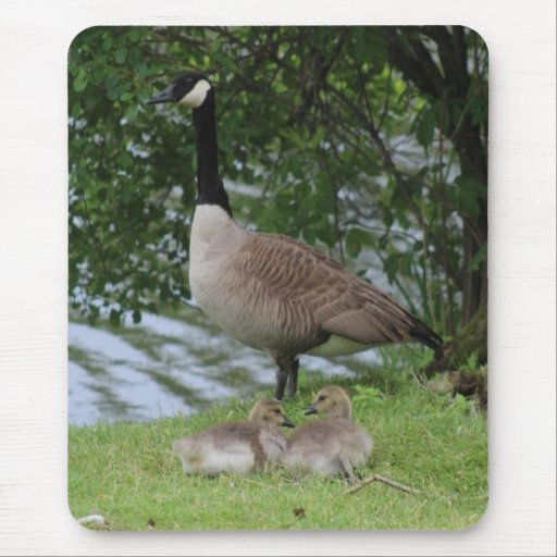 Goose and Goslings Mousepad