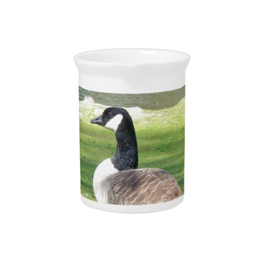 Goose at the waterfront, Wildlife Animals, Nature Pitcher