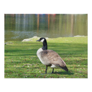 Goose at the waterfront, Wildlife Poster