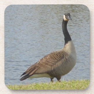 Goose By Pond Coaster Set