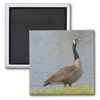 Goose By Pond Magnet