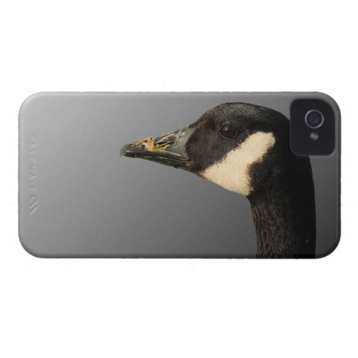 Goose head Blackberry Bold Case iPhone 4 Cover
