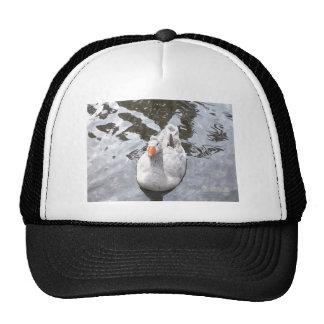 Goose in the Water Cap