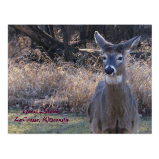 , Goose Island,LaCrosse, Wisconsin Postcard