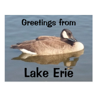 Goose on Lake Erie Postcard