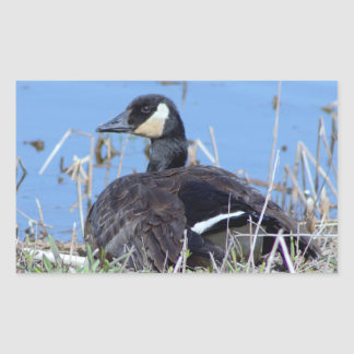 Goose Photo Rectangular Sticker