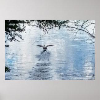 Goose Taking off Lake Poster