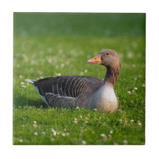 Goose Tile