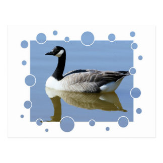 Goose with bubbles design postcard