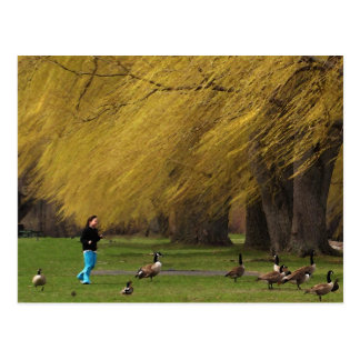 Goose Woman with Willows Post Cards