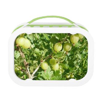Gooseberry Fruit On Bush Lunch Boxes