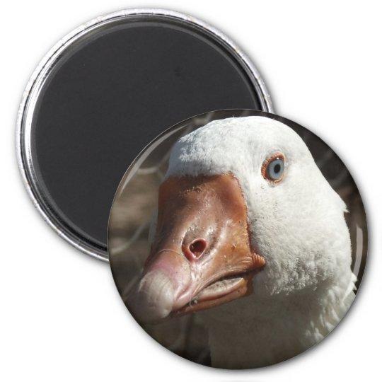 Goosey goosey magnet