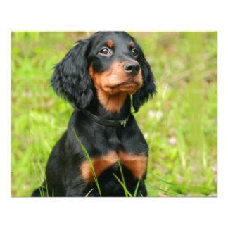 "Gordon Setter Attentive Black Dog Puppy 4.5"" X 5.6"" Flyer"