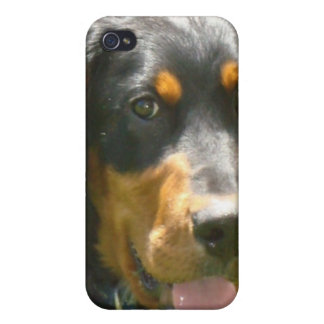 Gordon Setter Dog iPhone Case iPhone 4/4S Cover