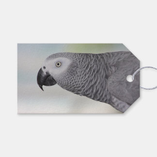 Gorgeous African Grey Parrot