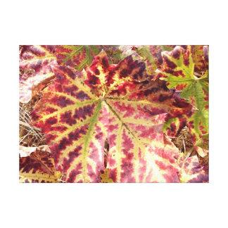 Gorgeous Autumnal Grape Leaf Canvas Print
