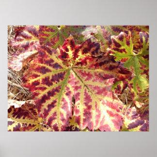 Gorgeous Autumnal Grape Leaf Poster