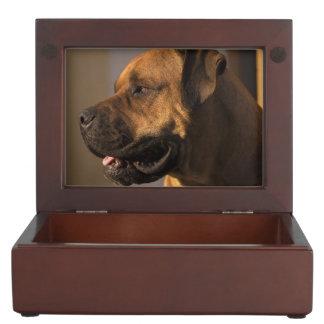 Gorgeous bull mastiff keepsake box