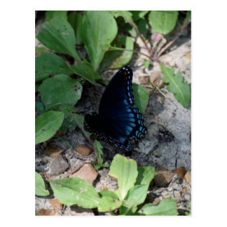 Gorgeous Butterfly Photograph Postcard