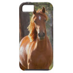Gorgeous Chestnut Brown Horse in Field iPhone 5 Case