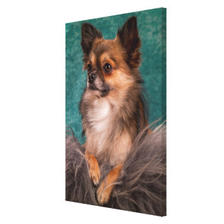 Gorgeous chihuahua portrait canvas print