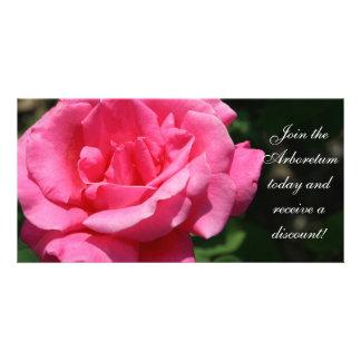 Gorgeous Deep Pink Rose Custom Photo Card