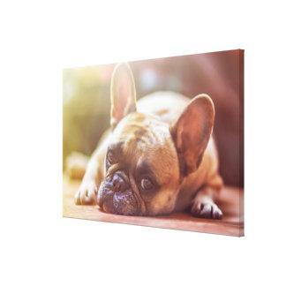Gorgeous french bulldog lying down canvas print