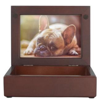 Gorgeous french bulldog lying down keepsake box
