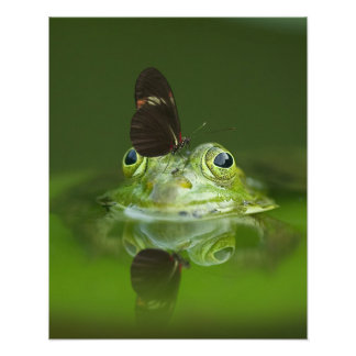 Gorgeous green water frog and butterfly in pond art photo