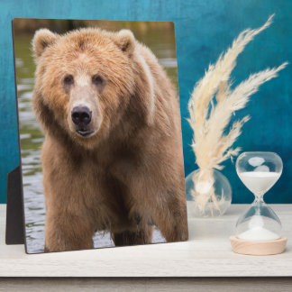 Gorgeous kodiak brown bear plaque
