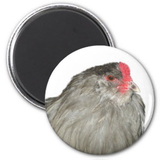 Gorgeous Lavender Ameraucana Rare Breed Rooster Fridge Magnets