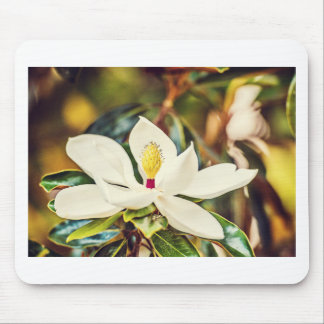 Gorgeous Mississippi Magnolia Mouse Pad
